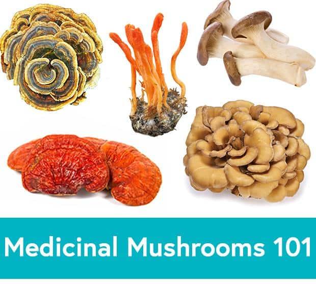 9 Hongos Tradicionales para Mejorar la Salud