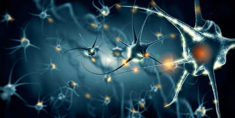 P21, el péptido nootrópico más potente para la neurogénesis